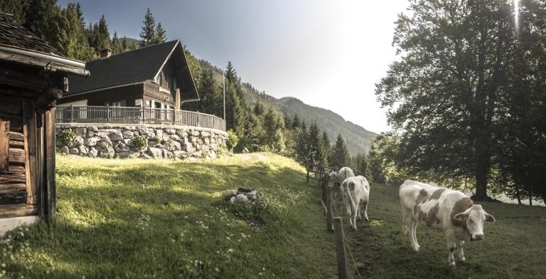 Naturfreundehütte Palfau