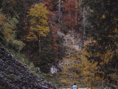 Forststraßenwandern Hartelsgraben